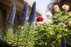 Regis Sunraysia - Flowers