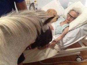 Aged Care Embleton WA Pet Therapy