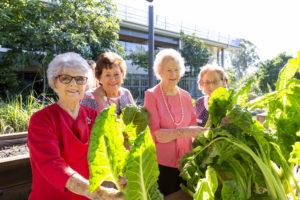 Regis Wynnum's Harvest Garden